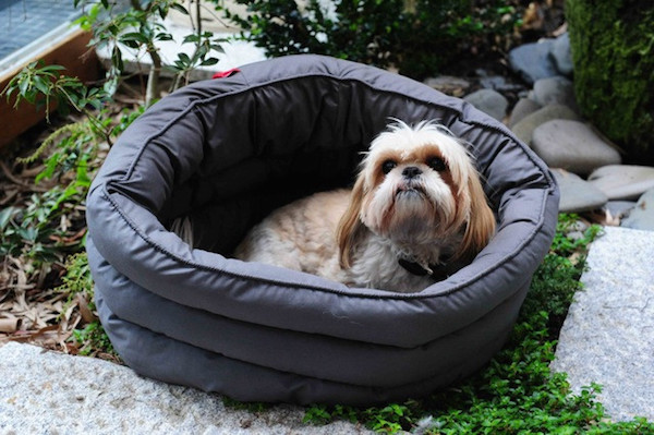 16 Designer S Luxury Dog Beds That Are Better Than Yours