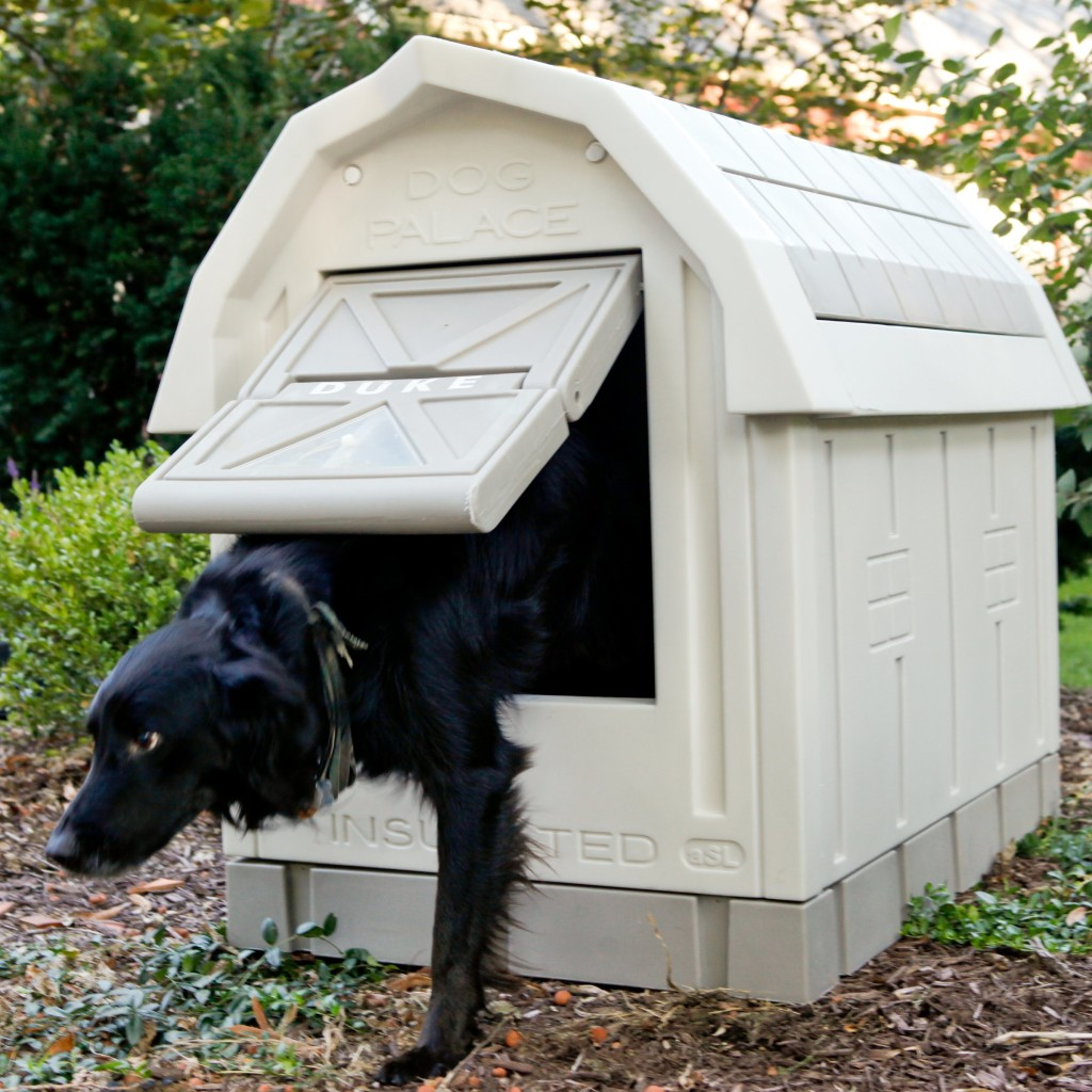 best-dog-kennels