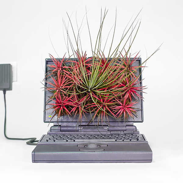 Artist Turns Old Apple Computers Into Plant Pots-14